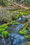 Mossy Rock Stream Stock Photo