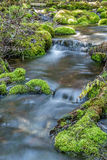 Mossy Rock Stream. Stream with moss covered rocks in Hyalite Canyon near Bozeman, Montana Royalty Free Stock Photos