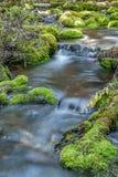 Mossy Rock Stream Royalty Free Stock Photos