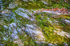 Mossy rock Stock Images