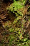 Mossy rock texture Royalty Free Stock Image