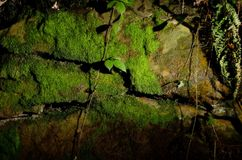 Mossy rock texture Royalty Free Stock Photos