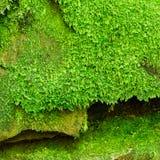 Mossy rock Stock Photos