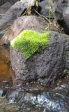 mossy rock royaltyfri foto