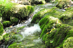 Mossy rocks Stock Image