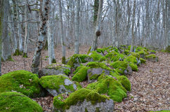 Mossy rocks Royalty Free Stock Images