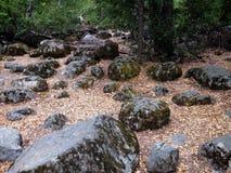 mossy rocks Arkivfoton