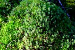 mossy rocks Arkivfoto