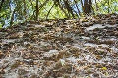 mossy rocks Royaltyfri Fotografi