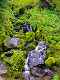 Mossy rocks along creek. Stock Photo