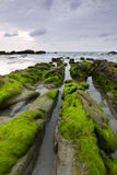Mossy rocks at a beach in Kudat, Sabah, East Malaysia Stock Image