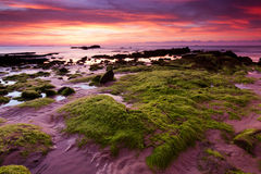 Mossy rocks at a beach in Kudat, Sabah, East Malaysia Stock Photos
