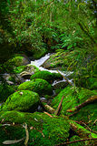 Mossy Rocks Stock Photo