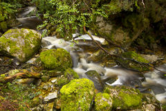 Mossy rocks and creek. Marion's Lookout Bushwalk, The Overland Track, Cradle Mountain-Lake St Clair National Park, Tasmania, Australia Royalty Free Stock Image