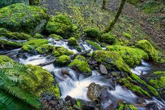 Mossy rocks at a creek in Oregon`s famous Columbia River Gorge. Pacific Northwest. Moss covered rocks at a stream in Oregon`s famous Columbia River Gorge stock images
