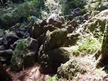 Mossy rocks in the deep forest.  Royalty Free Stock Image