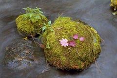 mossy rocks för liten vik Royaltyfria Bilder