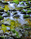 Mossy Rocks with flowing water from mountains Royalty Free Stock Image