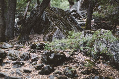 Mossy rocks in forest Stock Photography