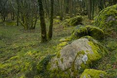 Mossy rocks in mountain forest scene Stock Photos