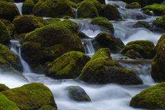 Mossy rocks in a mountain stream. Rocks covered with moss in a mountain stream Stock Photo