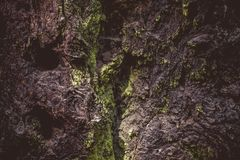 Mossy, Rocks, Outdoors Stock Images