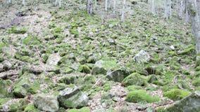 Mossy rocks stones stock video footage