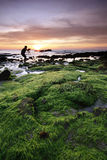 Mossy rocks at sunset in Sabah, Malaysia Stock Photo