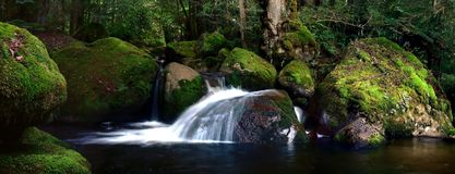 Mossy rocky river. River flows gently over mossy rocks, temperate rainforest. Panorama royalty free stock images