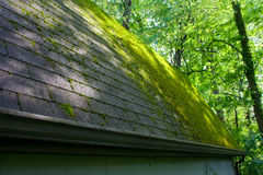 Mossy Roof Stock Photo