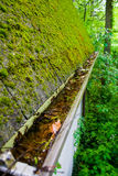 Mossy Roof and filled gutter. Stock Images