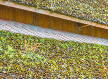 Mossy roof Royalty Free Stock Photo