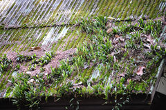Mossy roof Stock Image