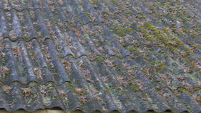 Mossy roofplates of a house stock video
