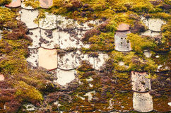 Mossy Rooftop Stock Images