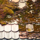 Mossy Rooftop Royalty Free Stock Image