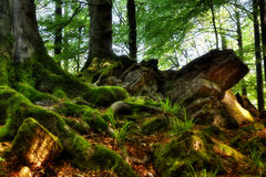 Mossy roots Stock Images