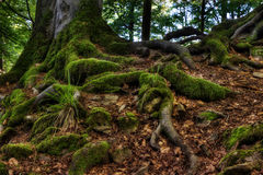 Mossy roots Stock Photo