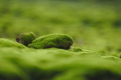 Mossy sea royalty free stock photography