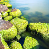 Mossy seashore stones Stock Photo