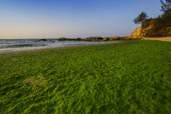 Mossy season at a beach in Kudat, Sabah, East Malaysia, Borneo Stock Image