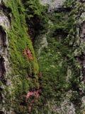 mossy skäll Fotografering för Bildbyråer