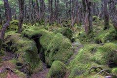 mossy skog Royaltyfria Foton