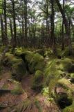mossy skog Arkivbild