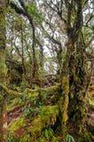 mossy skog Royaltyfri Fotografi