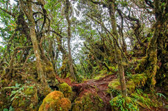 mossy skog Arkivfoton