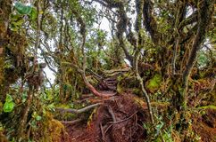 mossy skog Royaltyfri Foto