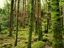 mossy skog royaltyfria bilder