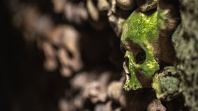 A Mossy Skull in the Catacombs of Paris 2. A mossy human skulls in the wall the Catacombs of Paris made of of Human bones and skulls. Truly a grim and stock photos