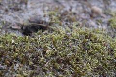 Mossy slipat täcker Arkivbild